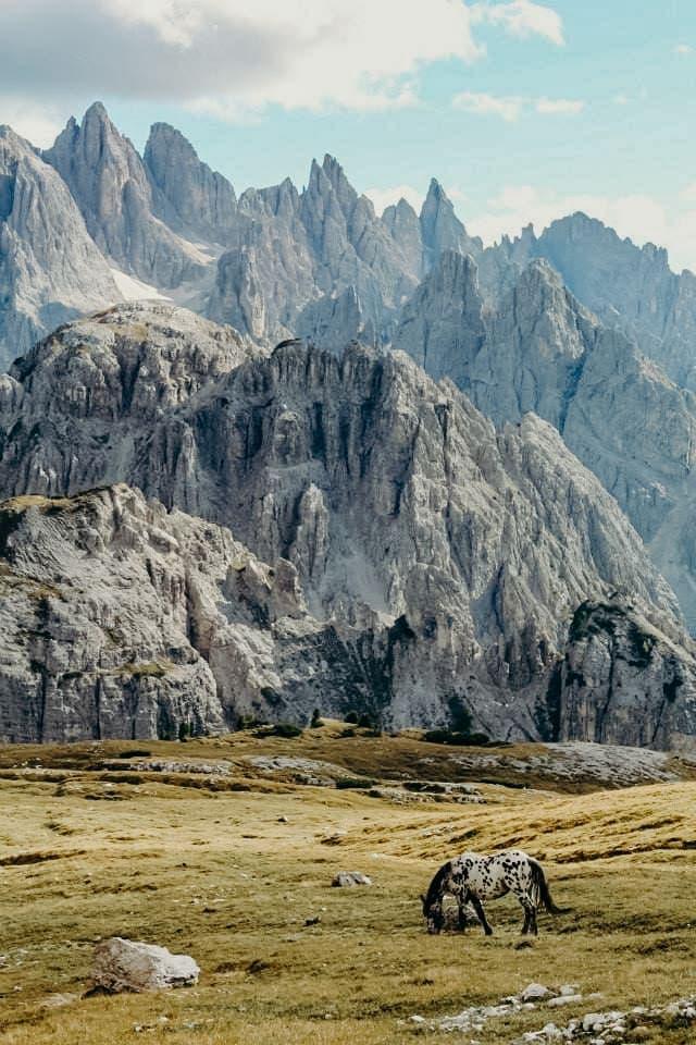 horse grazing dolomites mountain range Italy